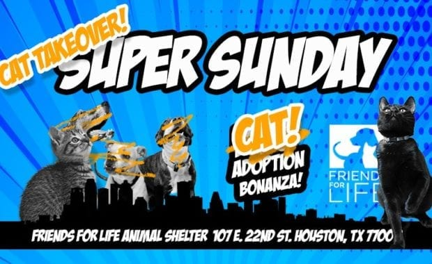 Super-Sunday-Adoption-Event-Cat-Takeover